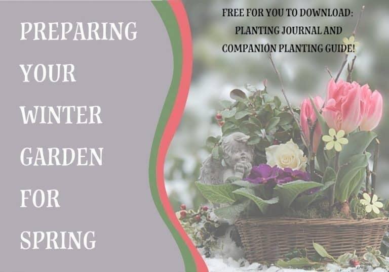 Preparing Your Winter Garden for Spring