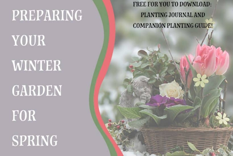 Preparing Your Winter Garden for Spring